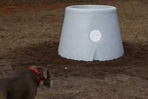 pasture waterer with dog