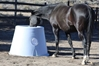 Standard Pasture Waterer Horse Drinking
