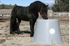 Friesian Horse Drinking Pasture Waterer